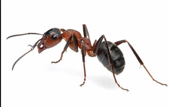 Ant Contol